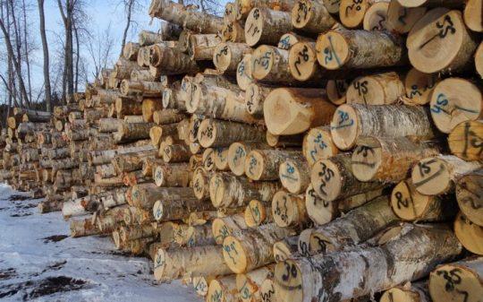 plywood veneer logs
